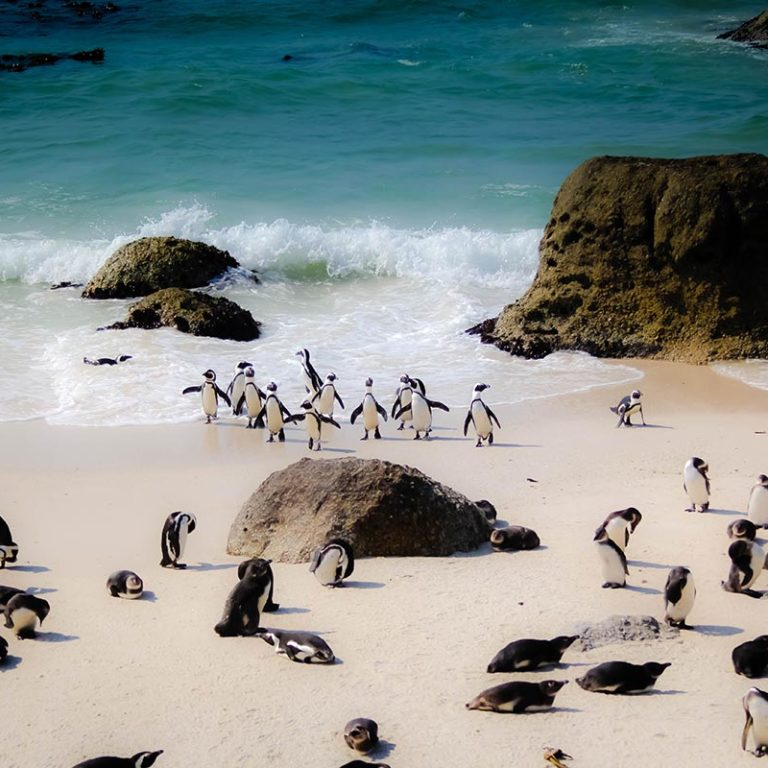 Island-Club-Hotel-Location-Penguins
